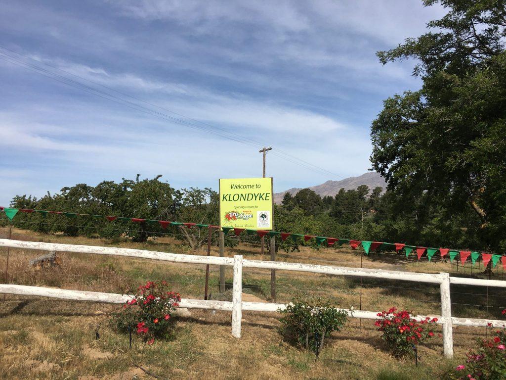 Klondyke Cherry Farm signage