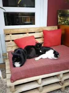 brew-and-breakfast-cats